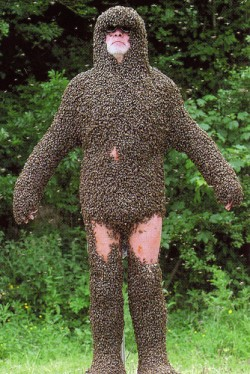 Man Covered in Bees