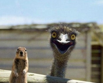Happy Ostrich is Happy