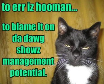 Cat Responsibility