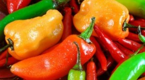 Why Peppers Taste Hot