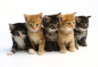 Icdn RU Little Kittens