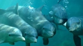Dolphins Don't Breathe Automatically
