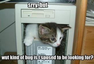 Server Bugs
