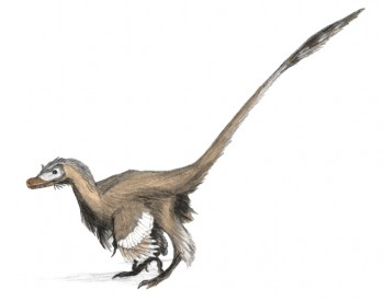 everything you know about velociraptors is a lie