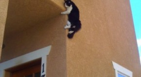 Domestic Cats Can Fall From Any Height With a Remarkable Survival Rate