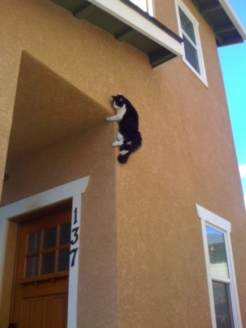 Ninja Kitty