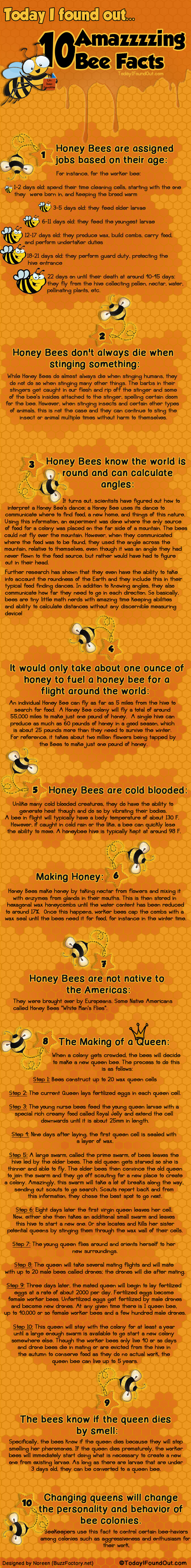 10 Amazzzzing Bee Facts Infographic on muwasalat.com