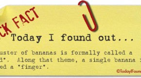 The Formal Name of a Cluster of Bananas