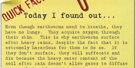 how-earthworms-breath2-558x280.jpg