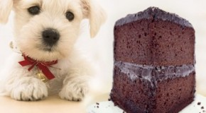 Why Chocolate is Bad for Dogs