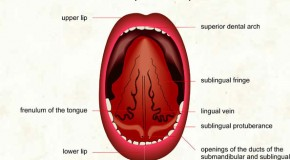 It is Not Possible to Swallow Your Tongue