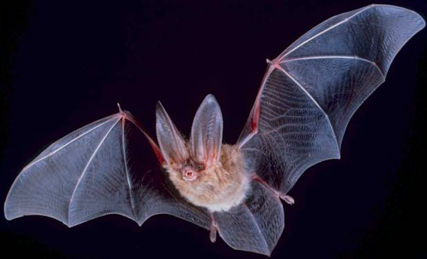 Bats Are Not Blind