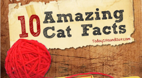 10 Amazing Cat Facts