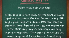 Honey Bees Actually Do Sleep