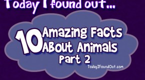 10 Amazing Animal Facts: Part 2