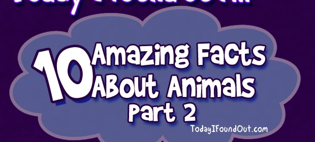 Animal Facts Infographic thumbnail
