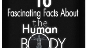 10 Fascinating Human Body Facts: Part-3