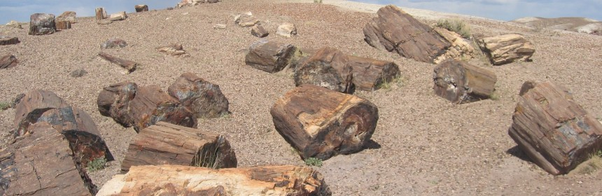 Petrified Logs, Photo Courtesy of Jonathan Zander