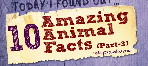 Animal Facts 3 Thumbnail