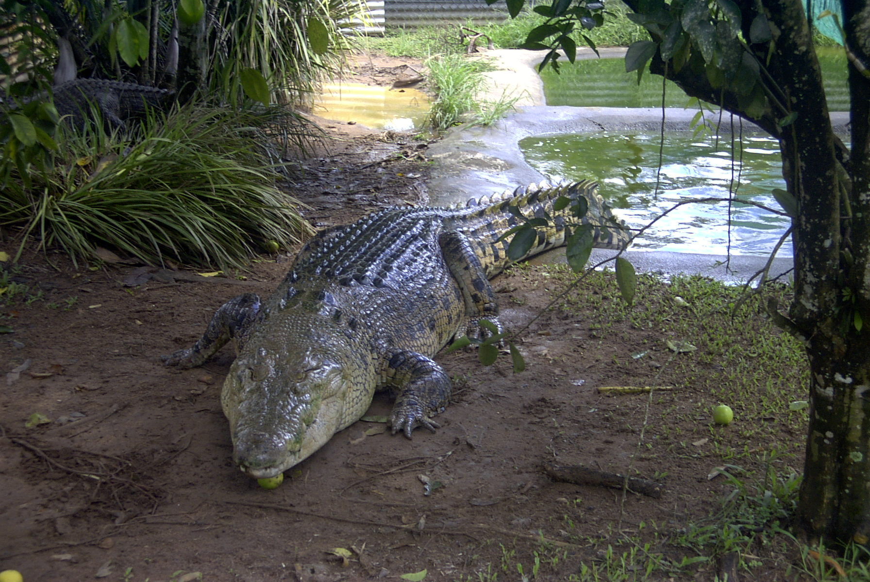 Crocodiles Really Do Shed Tears When They Eat 4d090a627cac7