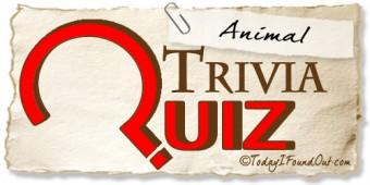 TIFO Animal Trivia Quiz