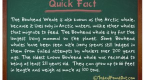 The Longest Living Mammal On The Planet
