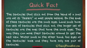 "The Tentacles That Stick Out From The Head Of A Snail Are Not Its ""Feelers"", But Its Eyes"