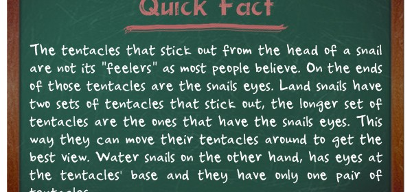 TIFO Quick Fact- Snail Facts