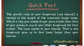 Why Fingernails Grow Up To Four Times Faster Than Your Toenails.