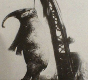 It is unknown whether this is a real or fake image of the hanging.  It was submitted to Argosy Magazine shortly after the hanging.