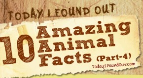 10 Amazing Animal Facts (Part-4)