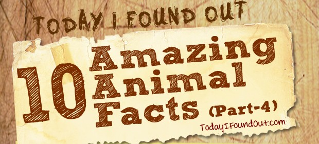 Animal Facts 4 Thumbnail