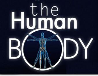 human-body2