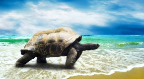 The Difference Between Turtles, Tortoises, and Terrapins, and Other Turtle Facts