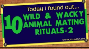 10 Wild and Wacky Animal Mating Rituals (Part-2)