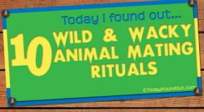 10 Wild and Wacky Animal Mating Rituals