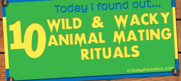 10 Wild and Wacky Animal Mating Rituals Thumbnail