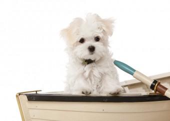 dog-boat