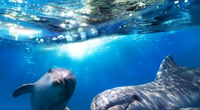 12 Fascinating Dolphin Facts