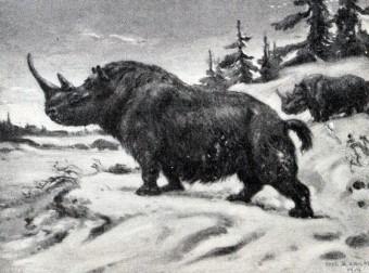Wooly_rhinoceros