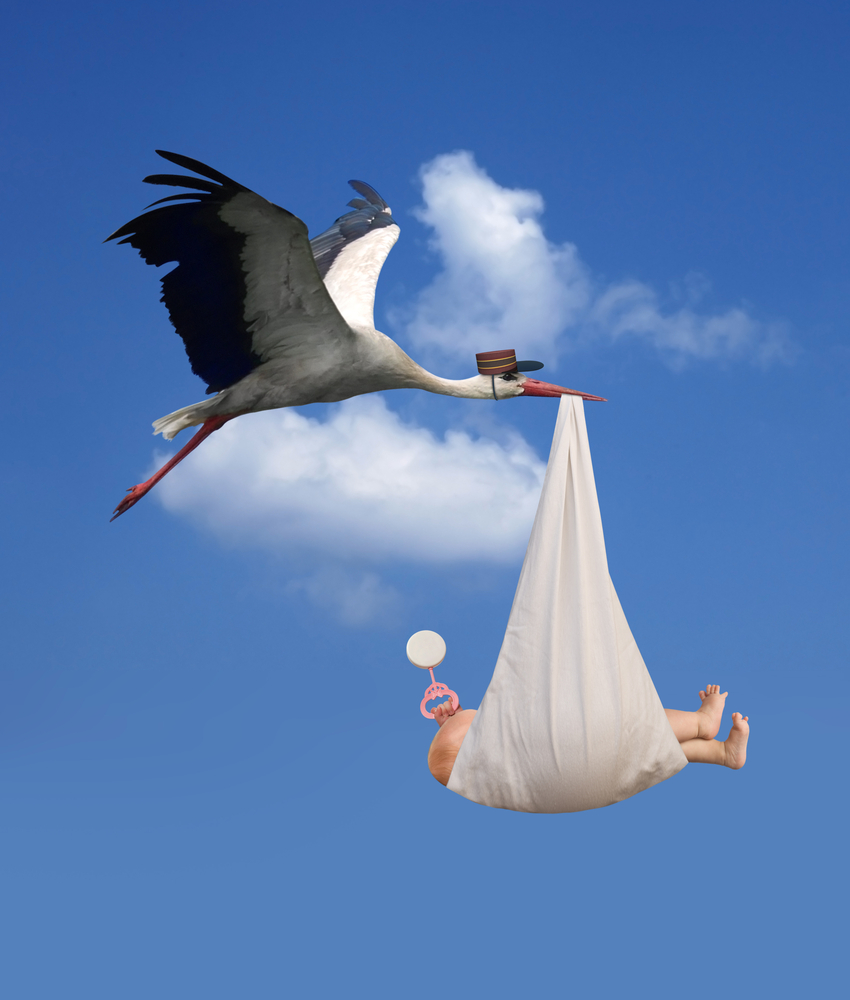 Why Storks are Associated with Delivering Babies