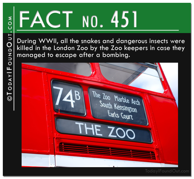 snakes and insects in London Zoos during WWII