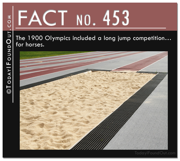 Long jump for horses