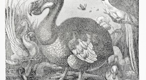 Why the Dodo Went Extinct