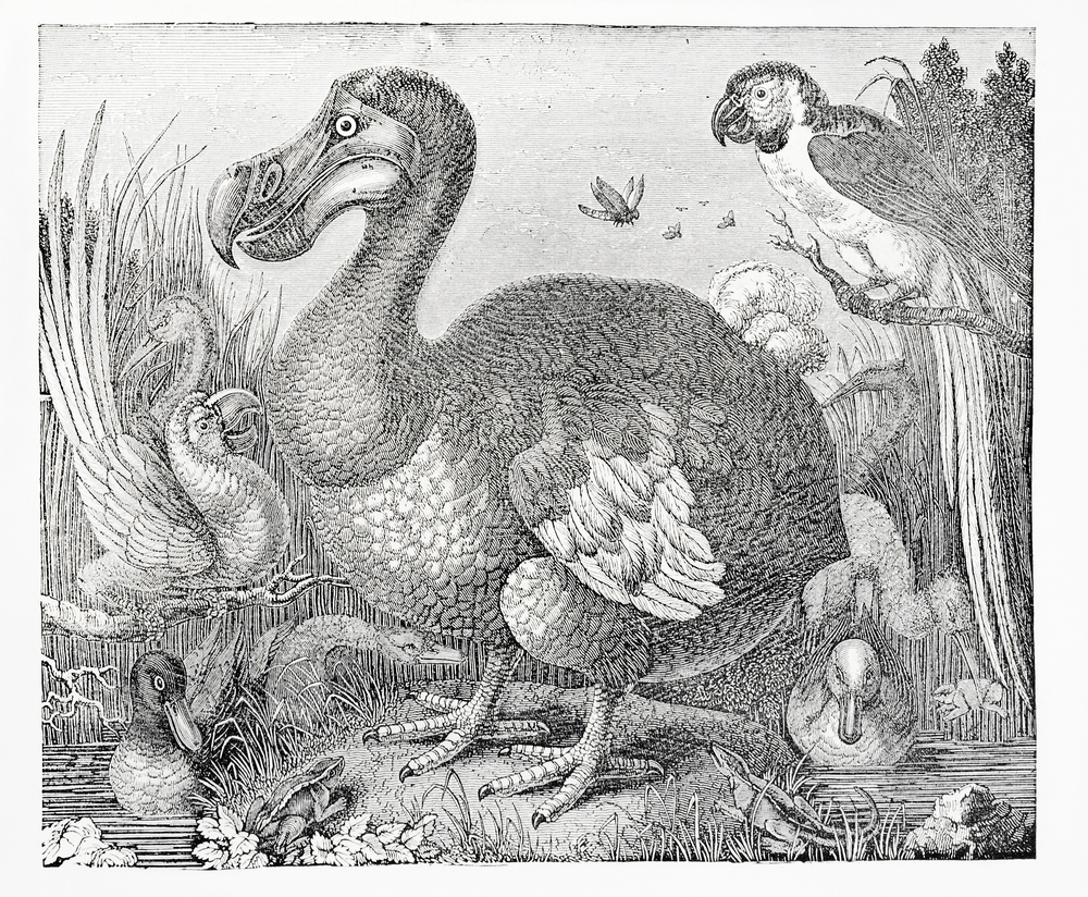 Image of: Png Smithsonian Magazine Why The Dodo Went Extinct