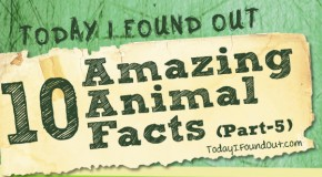 10 Amazing Animal Facts (Part-5)
