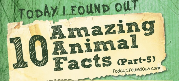 Animal Facts 5 Thumbnail