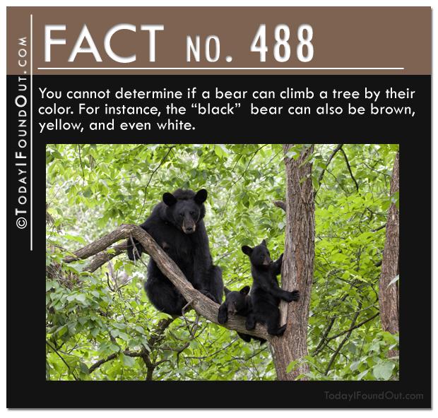 bear-fact