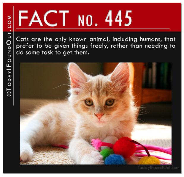 cat-fact