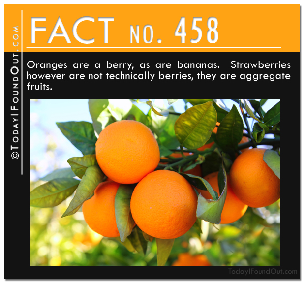 fruit-fact